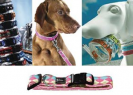 Canino | Pet Supplies