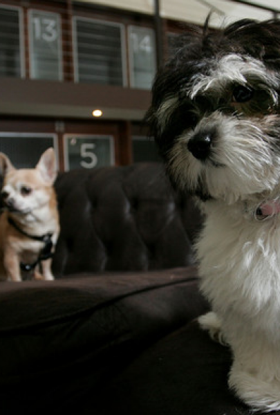 Prague Pet Hotels | Pet Accommodation in Prague