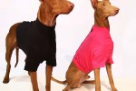 SOFA Dog Wear | Pet Stores in Prague
